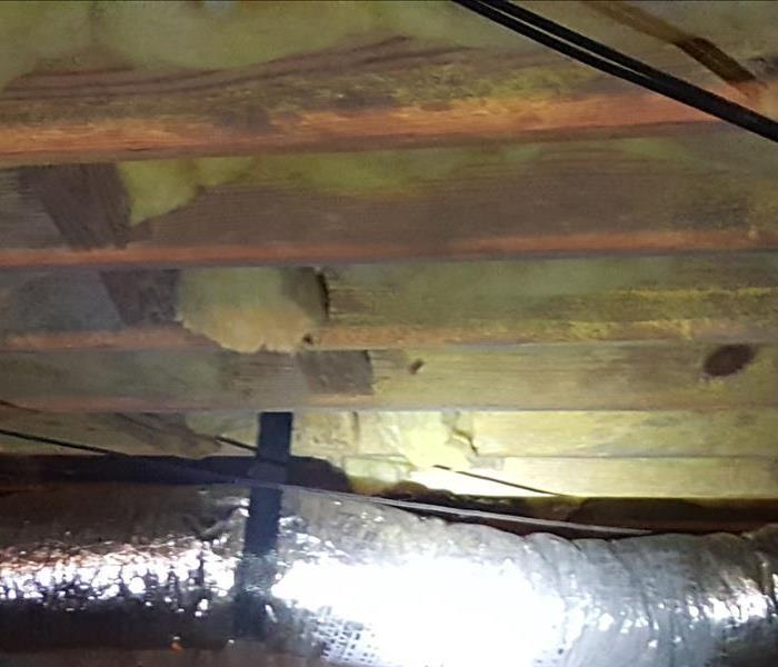 Mold in Thomasville Crawlspace Before
