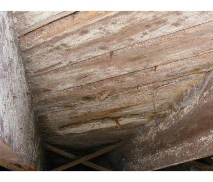 Mold Growth in a Bellevue Crawl Space