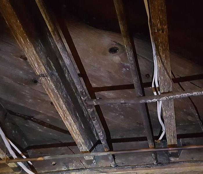 mold is visible on subfloor, floor joists and pipes in a basement.