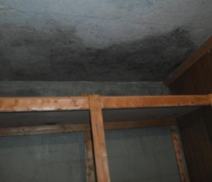 Mold Remediation Get The Facts About Mold In Your Wallburg Home